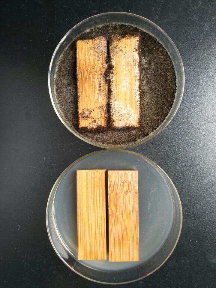木材防腐对比.jpg